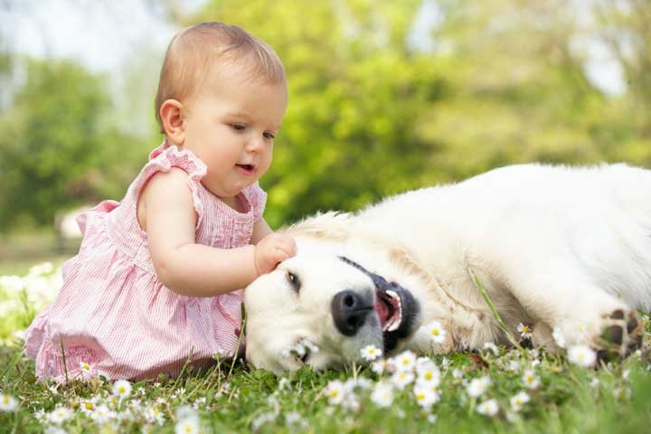 Your Little One Is Likely To Connect Animals With The Sounds He Makes