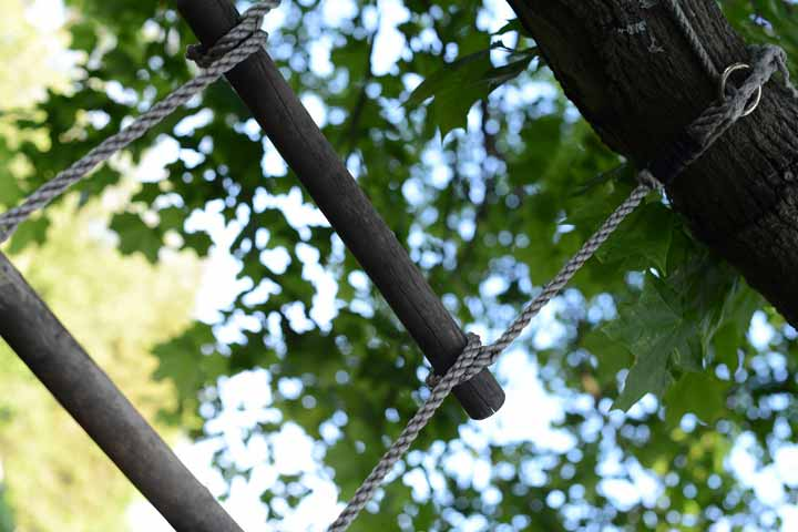 Your Child Is Able To Climb Short Trees And Ladders Skillfully
